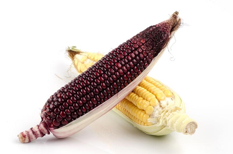 [cml_media_alt id='9379']2 фиолетовая кукуруза[/cml_media_alt]