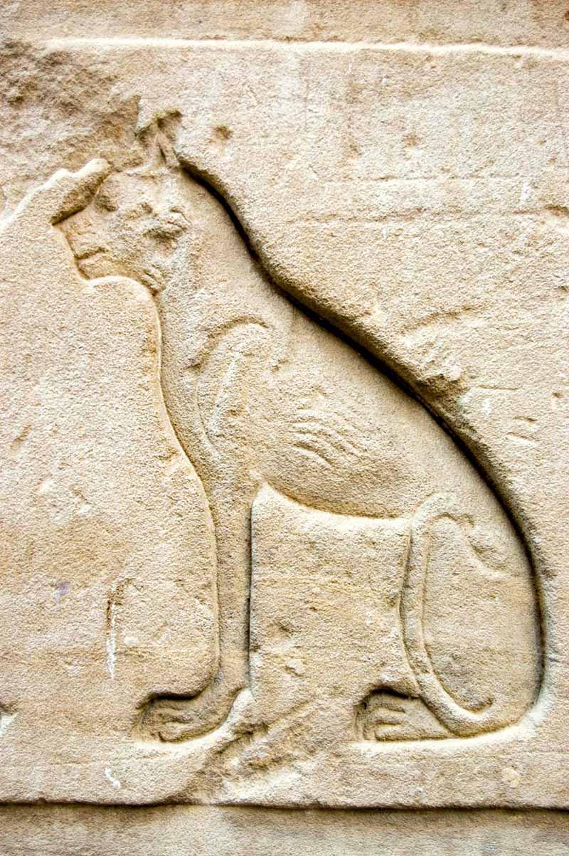 Изображение кошки в храме Хора в Эдфу