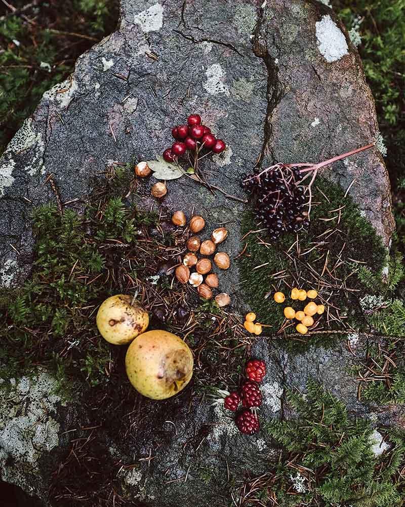 Осенний урожай: орехи, ягоды, плоды