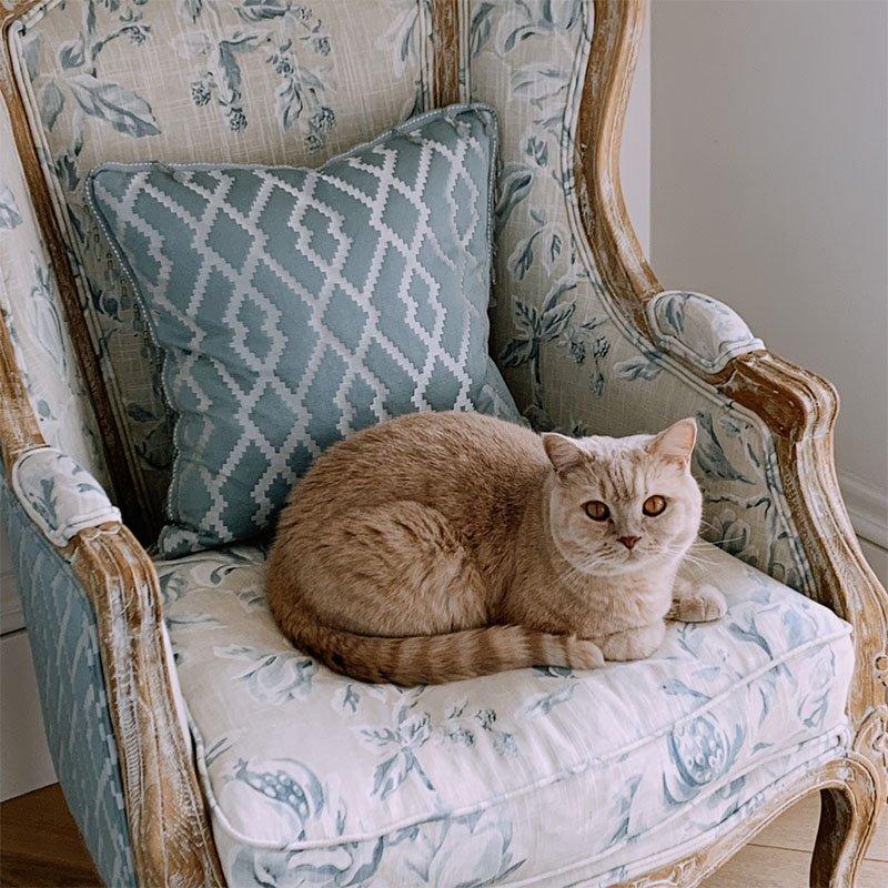 Взрослый британский кот в кресле