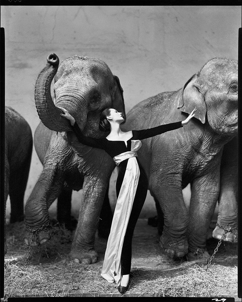 Довима и слоны